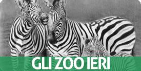 gli zoo ieri