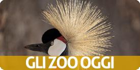 zoo oggi